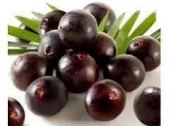 巴西莓粉 纯天然果粉 100%水溶果蔬粉