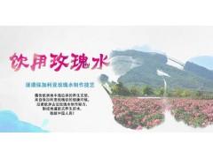 饮用玫瑰水卉和水品牌加盟 玫瑰水招商代理 玫瑰水品牌招商