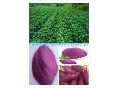 紫薯提取物 紫薯速溶粉 水溶性紫薯粉 厂家现货包邮