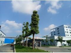 磷酸氢二钾食品级GBFCC医药级BPEPUSP试剂级生产厂家