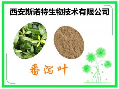 番泻叶粉 番泻叶提取物 提取物 常年种植