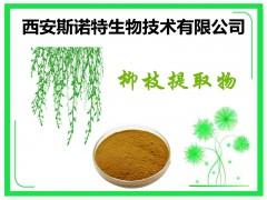 水杨甙25% 柳枝提取物 垂柳提取物 柳枝粉