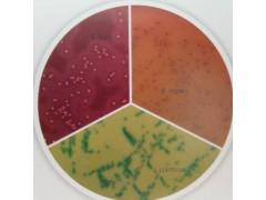 HiCrome™ Bifidobacterium Agar