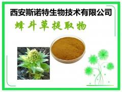 蜂斗草提取物 蜂斗草素 15% 蜂斗草 包邮