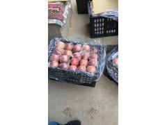 膜袋红富士纸袋红富士苹果价格