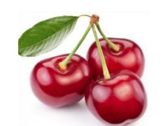 针叶樱桃提取物粉