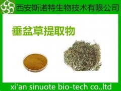 垂盆草提取物 10:1 比例提取 三原工厂
