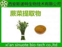 蕨菜粉 原料萃取粉 蔬菜粉 可试样