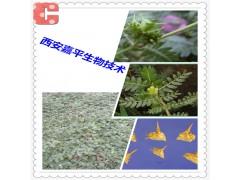 西安嘉平刺蒺藜提取物40%-90%