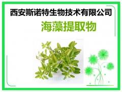 海藻提取物 海藻粉 原料加工提取 包邮