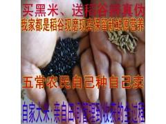 新米上市 十月稻田 黑米五谷杂粮 东北大米粗粮煮粥必备