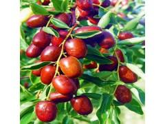 枸杞红枣原浆