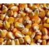 收购玉米价格 大量求购玉米高粱碎米棉粕荞麦油糠菜饼麸皮