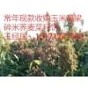 饲料厂家大量求购玉米高粱菜饼荞麦碎米油糠