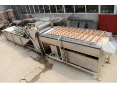 马铃薯土豆清洗线 大型土豆毛辊清洗设备