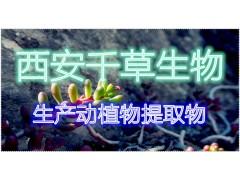 苦参浓缩粉厂家生产定制动植物提取物 定做浓缩浸膏