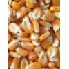 收购玉米价格  现金求购玉米高粱碎米棉粕荞麦油糠大豆菜饼