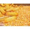 收�玉米、大米、小��等原料