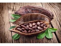 巴西进口咖啡豆报关公司