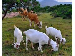 牛羊育肥增重 优农康牛羊饲料添加剂