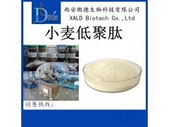 小麦提取物 小麦低聚肽 99% 小分子多肽