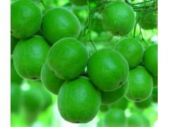 罗汉果总苷80% HPLC UV  替糖剂  包邮