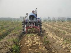 木薯收获机 小型红薯收获机 新型红薯收获机 红薯收获机械