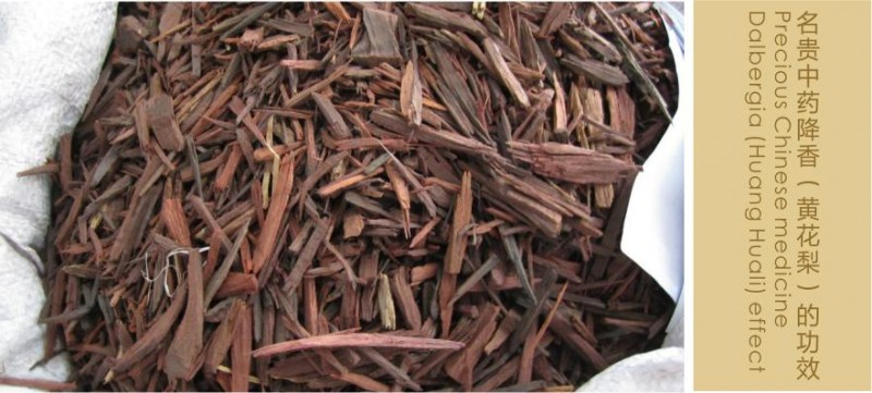 黄花梨茶产品详情1