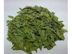 番泻叶提取物 10:1番泻叶提取粉