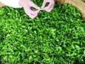9个月开600家店,漫雪的茶凭啥攻占全国市场?