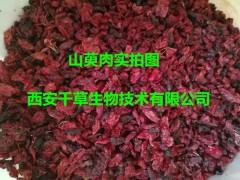 山茱萸浓缩粉厂家生产动植物提取物 厂家定制山茱萸纯浸膏