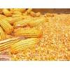 崇州声誉酒厂长期采购玉米小麦高梁等