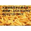 收购玉米大豆青饼高粱小麦大米等饲料原料