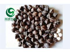 元宝枫籽油提取物 天然神经酸85% 新资源食品