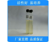 9ml生孢梭菌[CMCC(B)64941](厌氧菌)