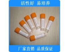 大肠埃希氏菌[ATCC25922] 冻干粉标准指控菌株