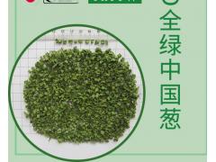 热风干燥全绿中国葱 厂家直销 量大价优 出口品质保证