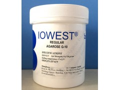 西班牙琼脂糖现货价格原装进口Biowest Agarose