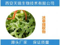冰草提取物10:120:1非洲冰菜 食品原料
