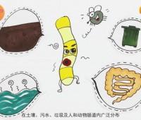 科普动画:变形杆菌食物中毒 (117播放)