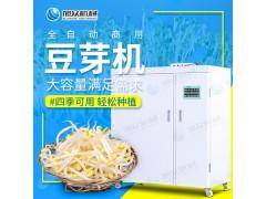 小本创业旭众箱式豆芽机 黄豆芽苗生长机 小型豆芽生长机