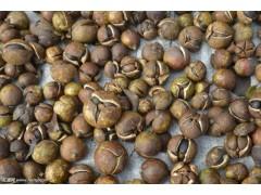 山茶籽怎么烘干效果好 烘干机价格 烘干机厂家