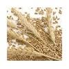 成都金富楼酒厂长期高价求购小麦高梁玉米
