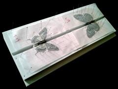 EVA展翅板、简易展翅板 蝴蝶展翅板 昆虫展翅板