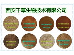 小蓟浸膏粉厂家生产提取物小蓟浓缩粉