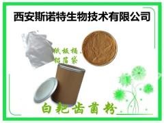 白耙齿菌浸膏粉 10:1 20:1 白耙齿菌粉 多种规格