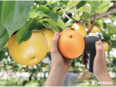 水果品质管理和检测——梨用非破坏式红外糖度计(供应)