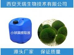 小球藻粉  现货供应高品质 裸藻粉小球藻