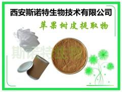 苹果树皮提取物 含根皮甙 根皮素 包邮发货