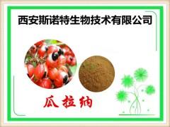 瓜拉纳提取物 20% 瓜拉纳(那)粉 种子提取